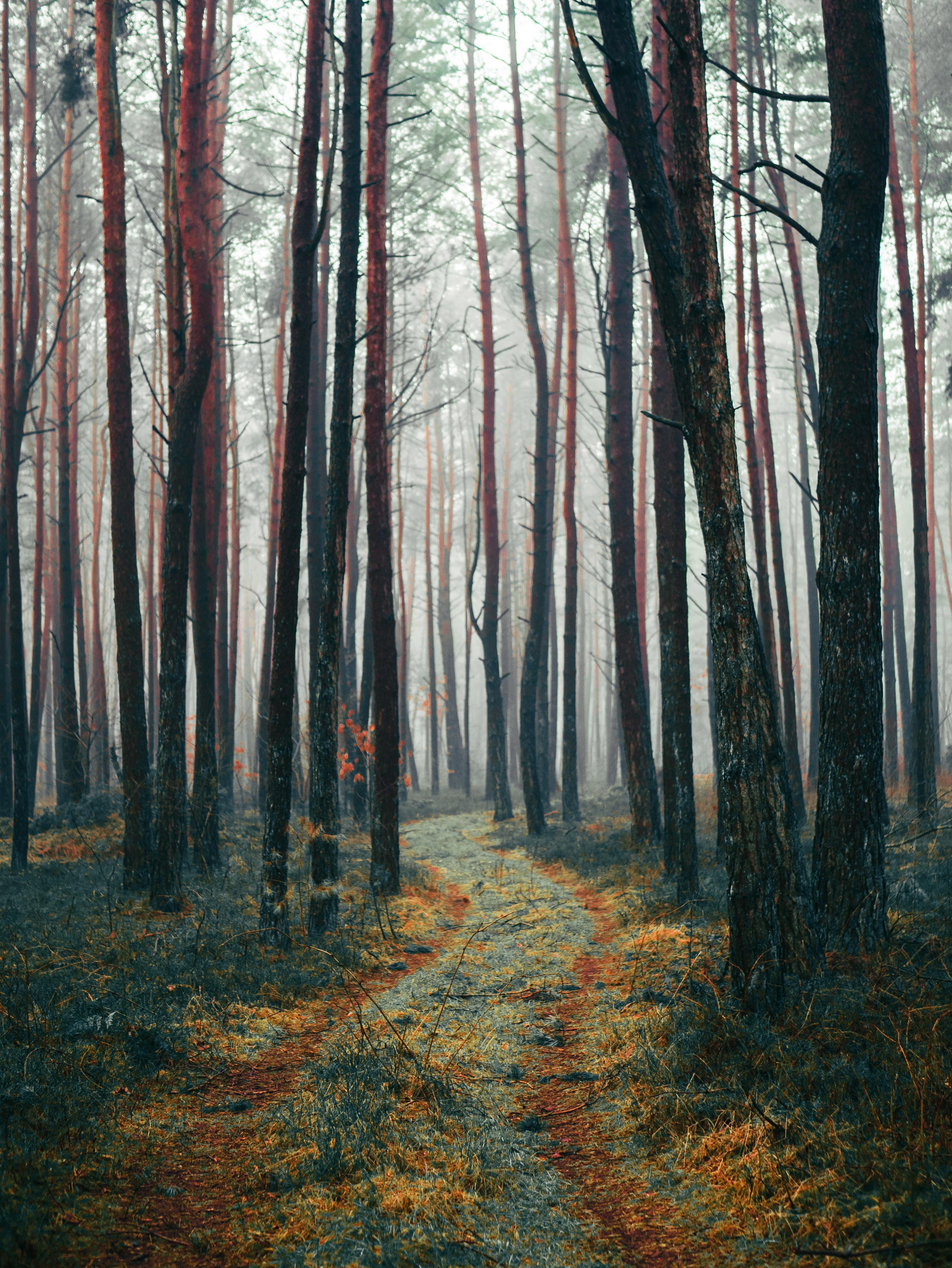 Uendelige skove